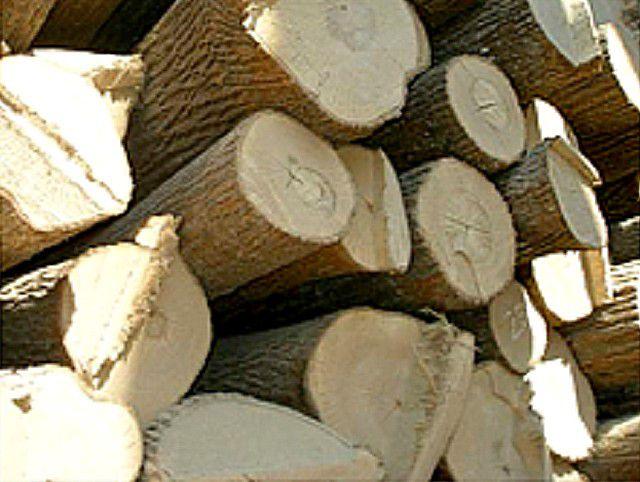 Липовые дрова дают хороший оздоровительный эффект