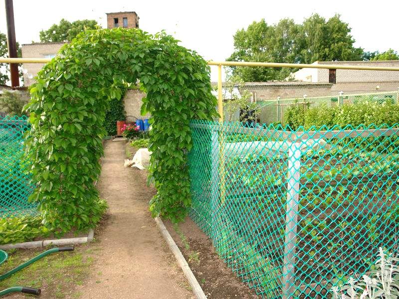 Рядом с живой изгородбю будет уместна живая арка