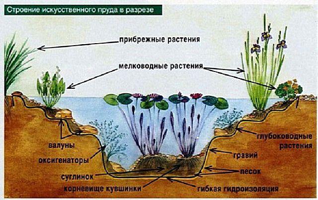 Размещение растений по уровням садового пруда