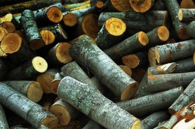 Ольховые дрова - обычно выделяются на общем фоне яркими расцветками на срезе