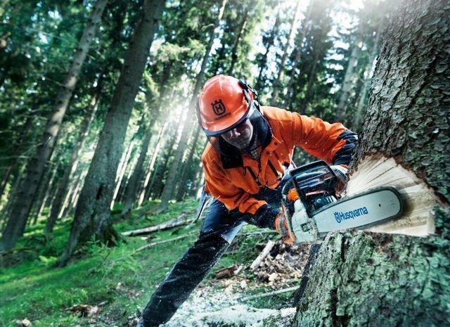Без бензопил невозможна промышленная заготовка леса