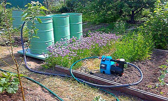 Правильнее всего поливать растения теплой отстоянной водой из бочек