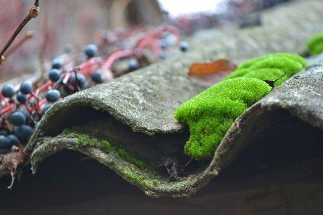 Казалось бы, безобидный мох, но он способен вызвать протекание кровли