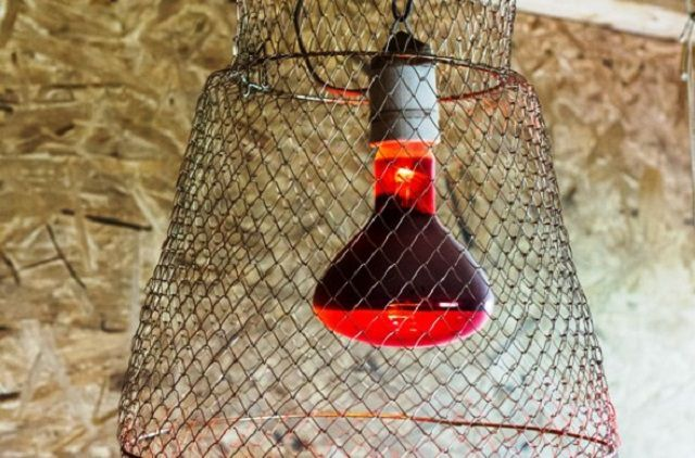 Инфракрасная лампа для обогрева птичника