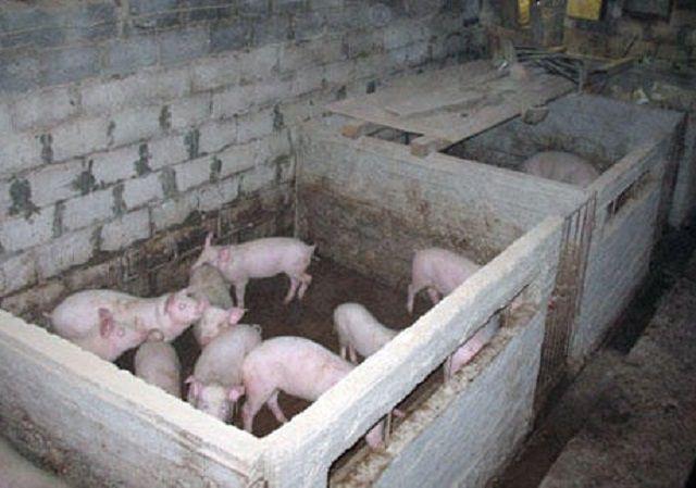 Отгороженные друг от друга секции свинарника называются станками