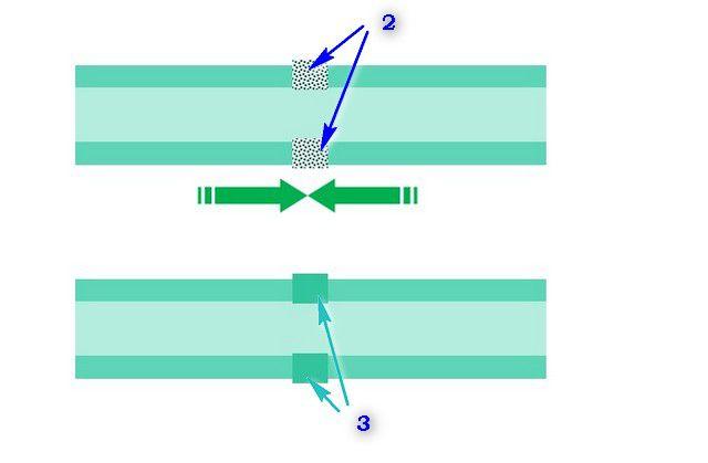 Стадии взаимопроникновения расплавленного полипропилена и окончательной полимеризации стыкового соединения