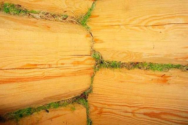 Традиционный материал для межвенцового утепления - мох