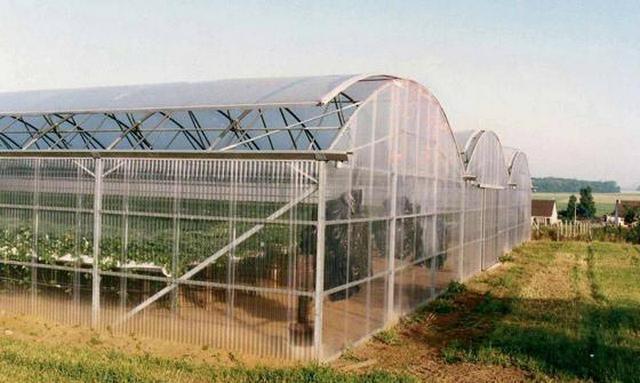 Пластиковый прозрачный шифер широко используется для строительства теплиц