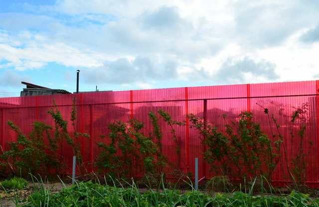 Многим наверняка понравится яркий полупрозрачный забор по периметру своего участка