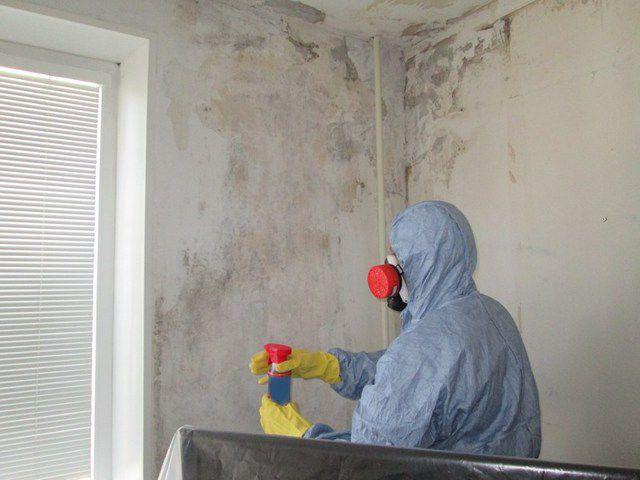 Если на поверхности есть явные признаки плесени, то «лечить» необходимо всю стену