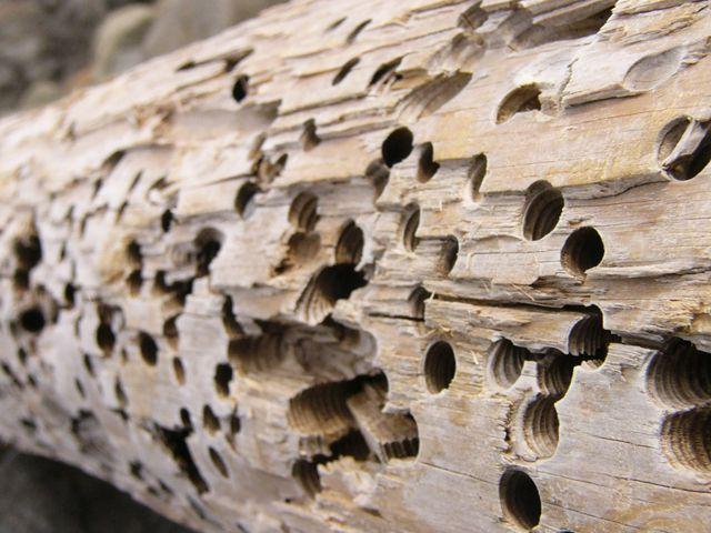 Этот дом не был защищен, чем воспользовались насекомые