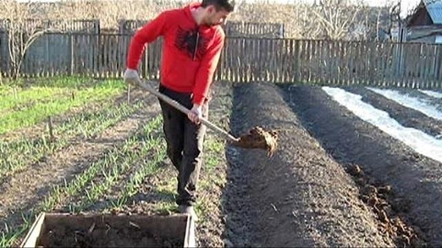 Очень неплохим решением станет использование компостных дороже между грядками – и аккуратность, и одновременная подпитка почвы