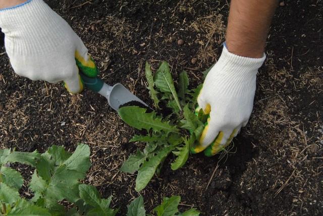 Весенняя подготовка участка с осенней посадкой газона дает время на качественную борьбу с сорняками и не необходимый «отдых» почве
