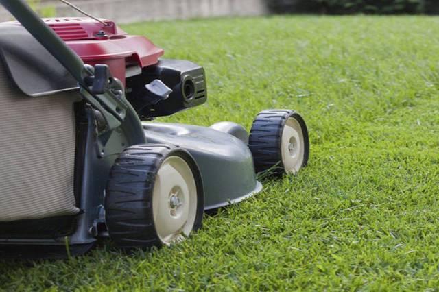 Первая стрижка газона должна выполняться с особой деликатностью