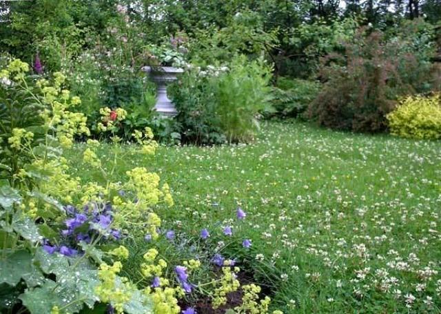 Типичный луговой газон – в данном случае к обычному комплексу трав добавлен белый клевер