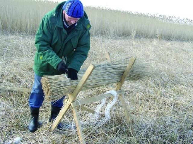 Работу по увязке и обработке камышовых снопов упростят несложные в изготовлении козлы