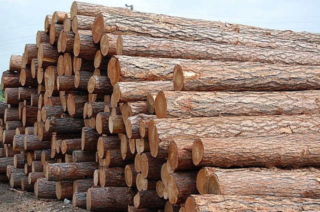 В подавляющем большинстве случаев на изготовление бруса для строительства домов идет древесина хвойных пород