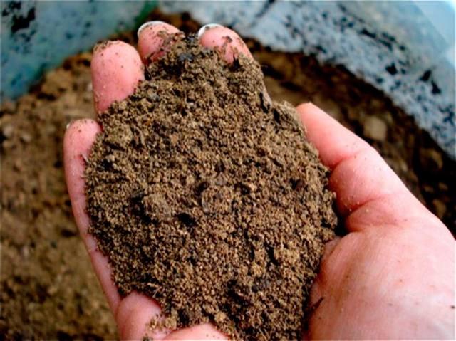 Песчаный грунт на расчетной глубине залегания фундамента – это очень неплохой вариант, позволяющий выбрать любой тип основания