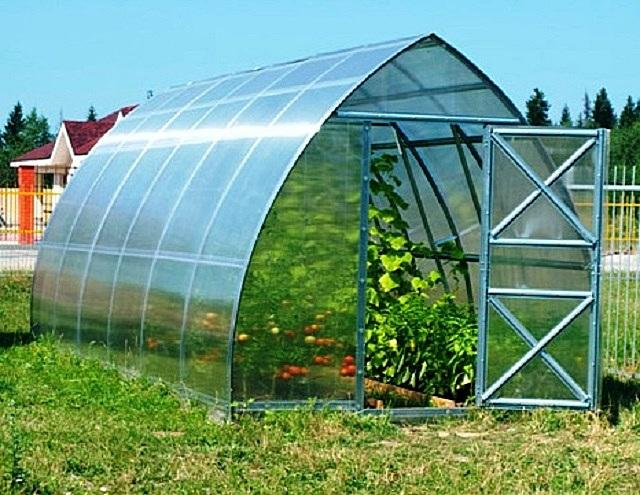 Прозрачность поликарбоната должна обеспечить пропуск достаточного количества солнечного света для развития культурных или декоративных растений