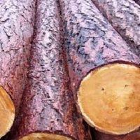 Как выбрать древесину для постройки дома