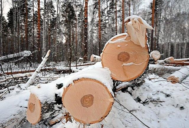 Лучшими эксплуатационными показателями всегда отличаются материалы, полученные из деревьев, срубленных зимой
