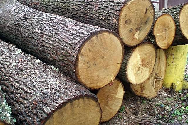 Дуб подходит для любых строительных и отделочных работ. Вопрос лишь в рентабельности такого подхода, так как стоимость подобной древесины – очень высока.