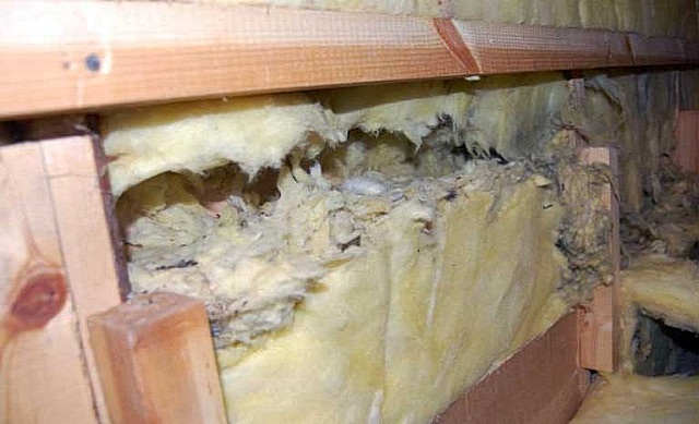 Ходы, проделанные грызунами в утеплителе стен каркасного дома.