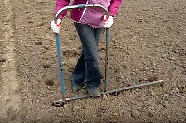 Создание в почве лунок для посадки клубней с помощью двойного маркера – очень быстро, с сохранением ровности рядов, что очень важно для последующего ухода – прополки и окучивания, и для уборки урожая.