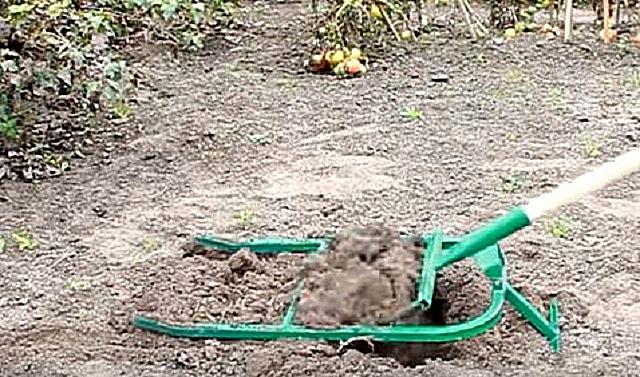 Вторая фаза – от усилия, приложенного на черенок, рабочие вилы понимаются вверх, поднимая пласты земли и вытягивая корни сорняков