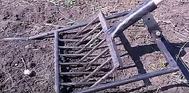 Вскапывание и рыхление сухой почвы с помощью самодельного инструмента.