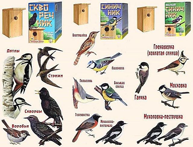 Виды птиц, охотно поселяющихся в скворечниках
