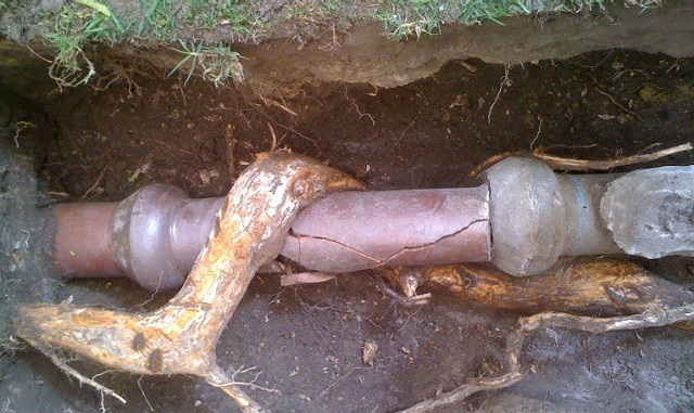Корни растения нарушили целостность канализационной трубы.