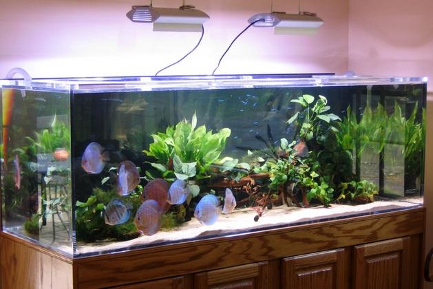 Наличие в комнате крупного аквариума способствует поддержанию оптимальной влажности воздуха.