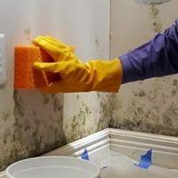 Грибок в ванной комнате как удалить: используем народное средство для удаления грибка