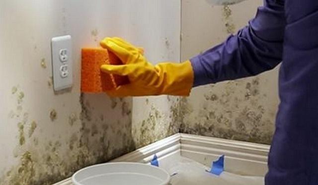 Грибок в ванной комнате как удалить - готовые составы и народные ...