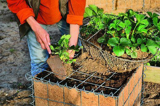 Шаг 8.Высадка растений и уход за ними.