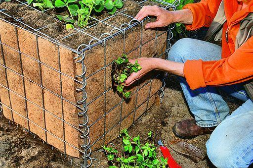 Кустики можно посадить и по бокам