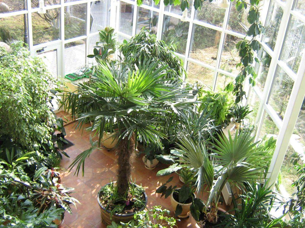 Не забывайте о расположении горшков с растениями: солнечная сторона – отличное место для светолюбивых культур