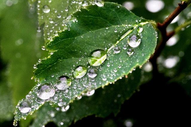 Выпадение утренней росы – наглядная демонстрация достижения предела насыщения при падении температуры воздуха.