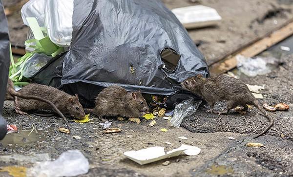 Отрава для крыс название