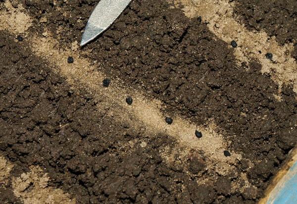 Семена на грядках нужно высеивать по определенной схеме, выдерживая расстояние между грядками