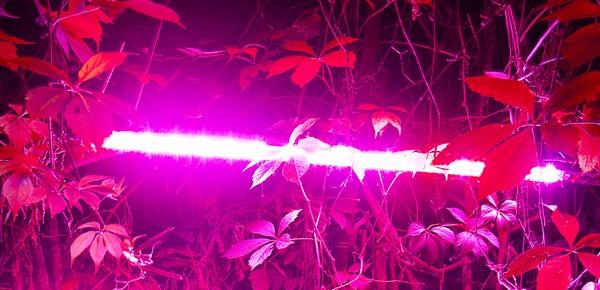 Чтобы растению хватало освещения, лучше дополнительно использовать фитолампы