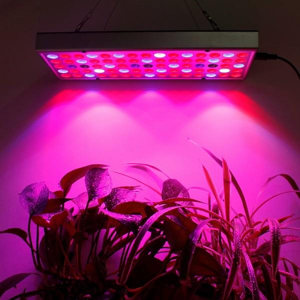Если вы выращиваете олеандр дома, можно установить лампу Bio рядом с ним, чтобы компенсировать возможную нехватку света