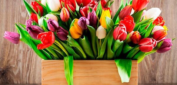 Хорошо тюльпаны растут как при ярком освещении, так и в притенении