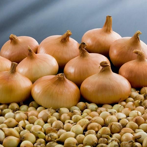 Высаживать лук в теплицы стоит либо поздней осенью, либо ранней весной, когда температура воздуха начнет постепенно повышаться