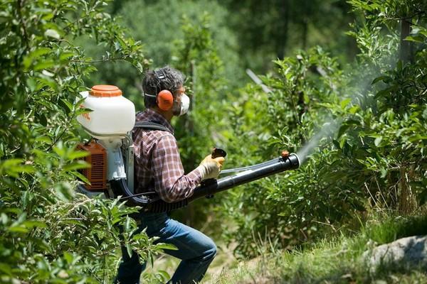 Рекомендуется проводить несколько опрыскиваний деревьев для профилактики и уничтожения паразитов, возбудителей болезней