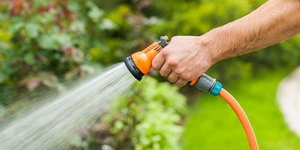 Поливать растение в летний период лучше ежедневно, но делать это нужно либо рано утром, либо после заката