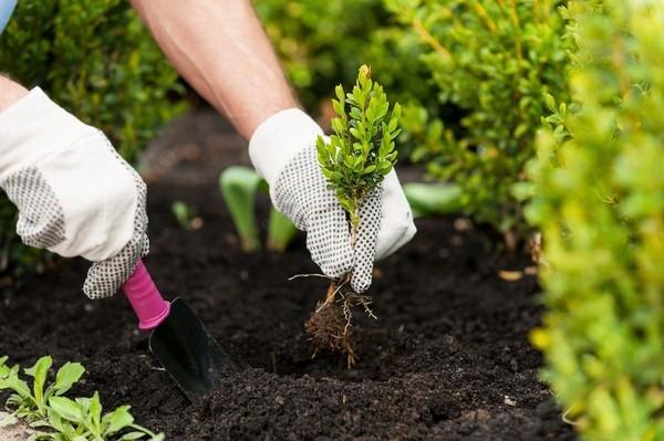 В дни полнолуния и новолуния лучше заниматься планированием высадки растений