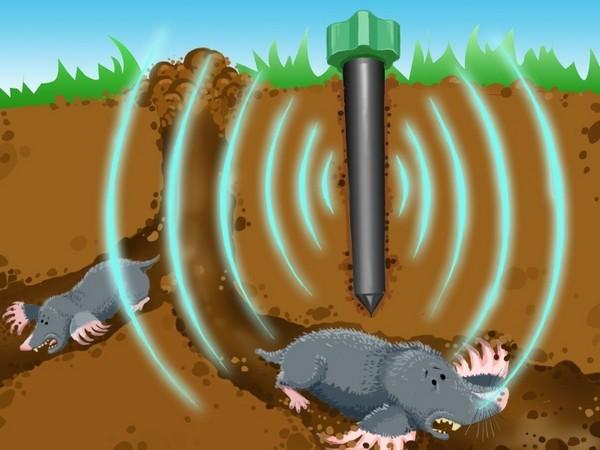 От кротов можно избавиться с помощью химических или ультразвуковых отпугивателей