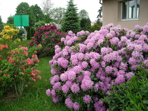 Цветы могут быть расположены в форме соцветий, группами